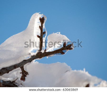 Frozen, ice covered tree branch with a snow coating on top against bright blue sunny skies