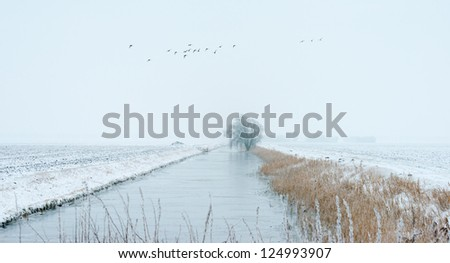 Frozen reed along a canal in winter
