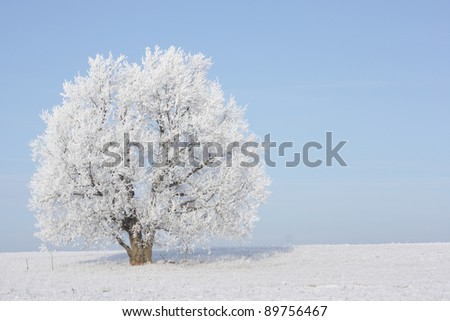 Frozen tree in field with blue sky on the background. No any post-processing