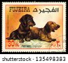 FUJEIRA - CIRCA 1980: Postage stamp printed in Fujeira showing dog dachshunds, circa 1972 - stock photo