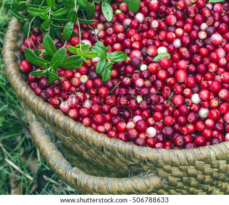 Full basket cranberries