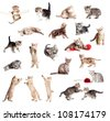 Funny British kittens collection isolated on white - stock photo