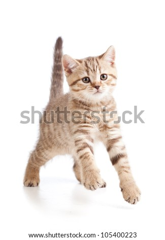 funny cute young cat  isolated on white background