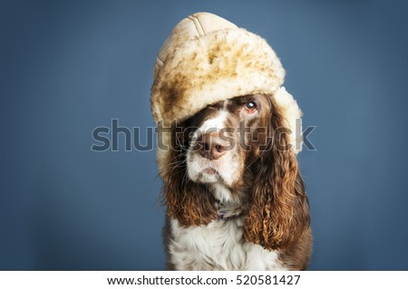 funny dog wearing a winter hat in studio