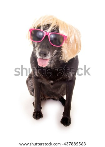 Funny dog with glasses and wig