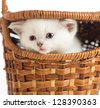 Funny kitten in basket closeup - stock photo