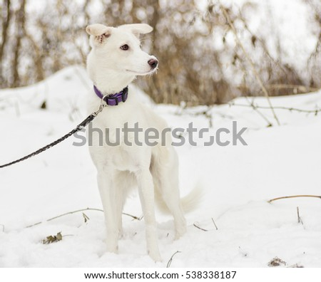 funny puppy on a winter walk