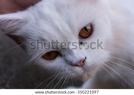 Funny White Cat