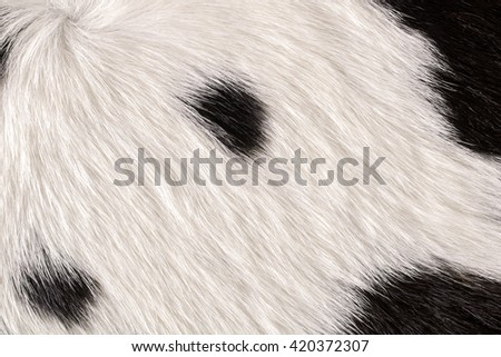 Fur cow leather texture background