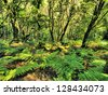 Garajonay National Park, La Gomera, Canary Islands, Spain - stock photo