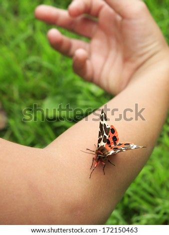 Garden tiger moth on the hand.