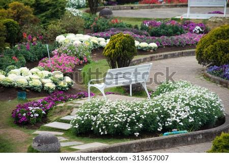 Arbustos que florecen todo el año | Todo el año Arbustos De acuerdo a la temporada | Balcón Jardín Web