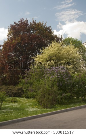 Garden with lilac and decorative maples in spring