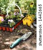 Gardening trowel and plants - stock photo