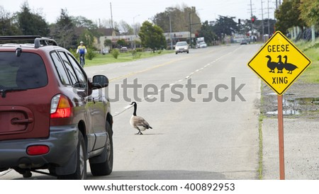 Geese Crossing sign with geese in the road, a hazard to automobile drivers and bicyclists.
