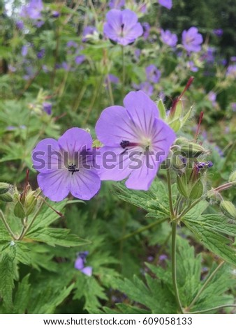 Anchorage Botanical Garden Flower Stock Photo 609057599