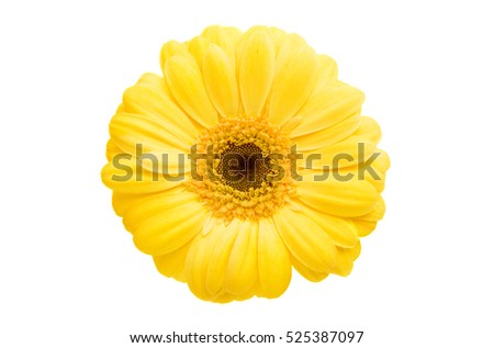 gerbera flowers on a white background