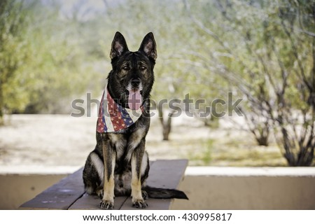 German shepherd dog sitting on a table at the park while wearing patriotic bandana