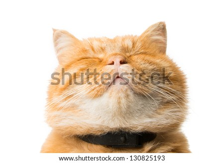 ginger cat isolated on white background