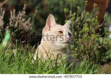 Ginger female cat playing in a garden