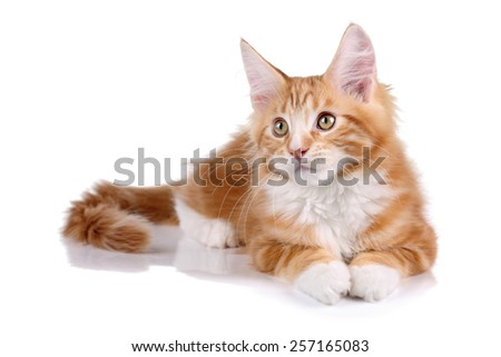 ginger kitten lying on a white background