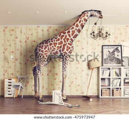 giraffe breaks the ceiling in the living room. Photo combination concept