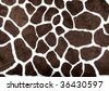 Giraffe pattern for background - stock photo