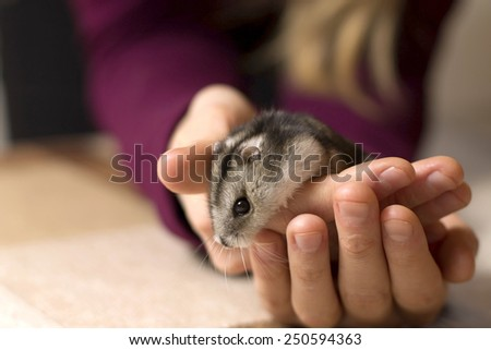 girl holding a tiny, beautiful hamster