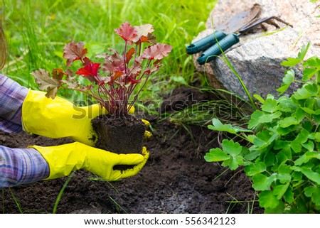 Girl is engaged in planting flowers in the garden