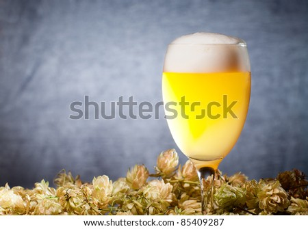 Glasses of beer with hop over blue