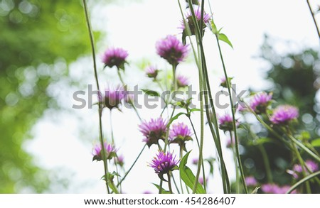 globe amaranth flower
