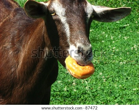 Goat Eating Stock Photos, Illustrations, and Vector Art