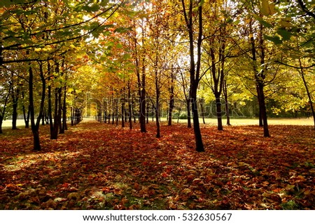 Golden autumn in city park - many colorful leaves and trees - forest carpet