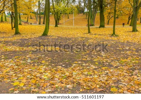 Golden autumnal leaves lying on ground in city park. Colorful autumnal landscape.