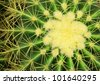 Golden Barrel Cactus(Mila sp.) in close up - stock photo