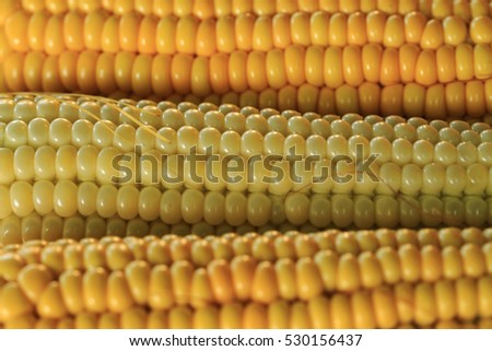 golden corn texture as nice natural food background