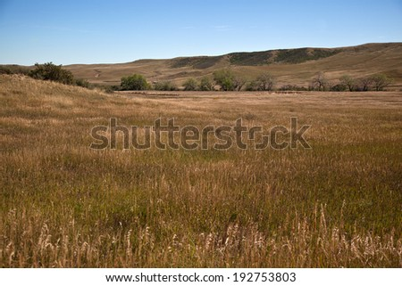 golden dry grass in late autumn with blue sky