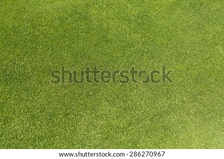 Golf green grass background on a bright day