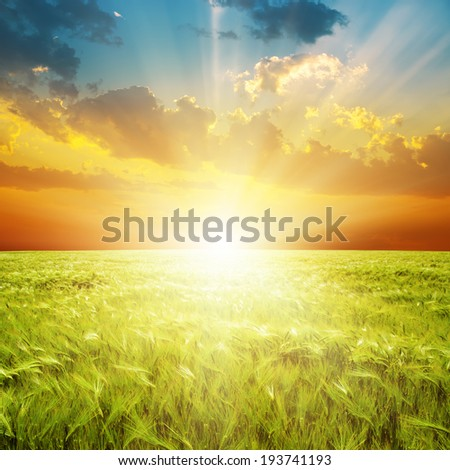 good orange sunset over green agriculture field