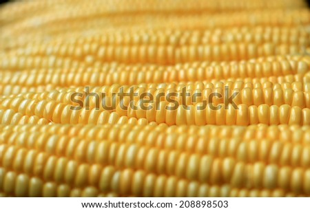 Grains of ripe corn.