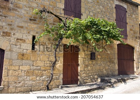 Grape vine growing along an old building and over a red doorway in a French village