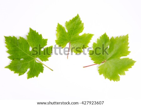 Grapes leaves macro isolated on white background