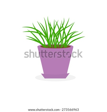 Grass Growing in violet lower pot icon Isolated White background Flat design