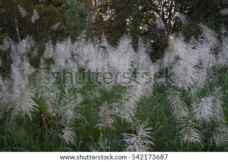grass White flowers