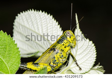 how to stop grasshoppers eating plants