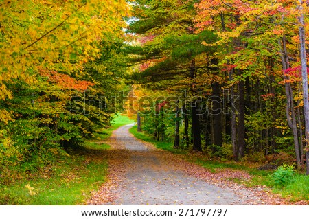 Gravel road leading through a canopy of trees, Stowe, Vermont, USA