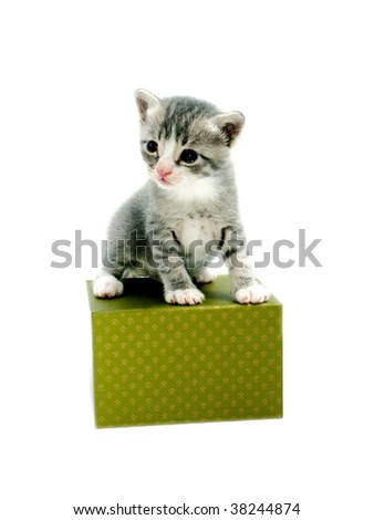 Gray kitten on green box