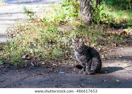 Gray street cat on ground path