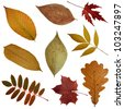 green and yellow red autumn, leaves pile isolated  on a white background - stock photo