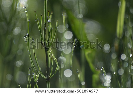 Green blurred background of grass and dew